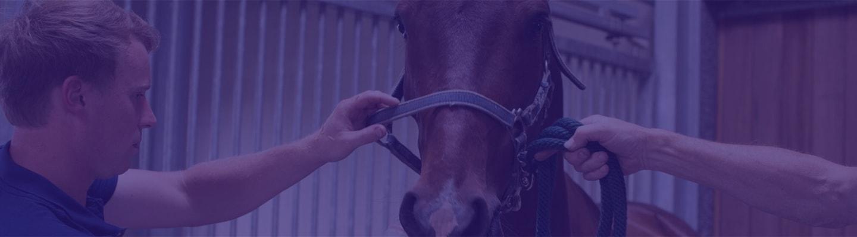Controle Paardengebit Paardentandarts Bregt Vernaeve