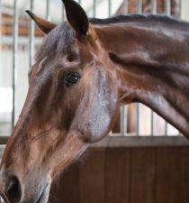 paardentandarts tarieven
