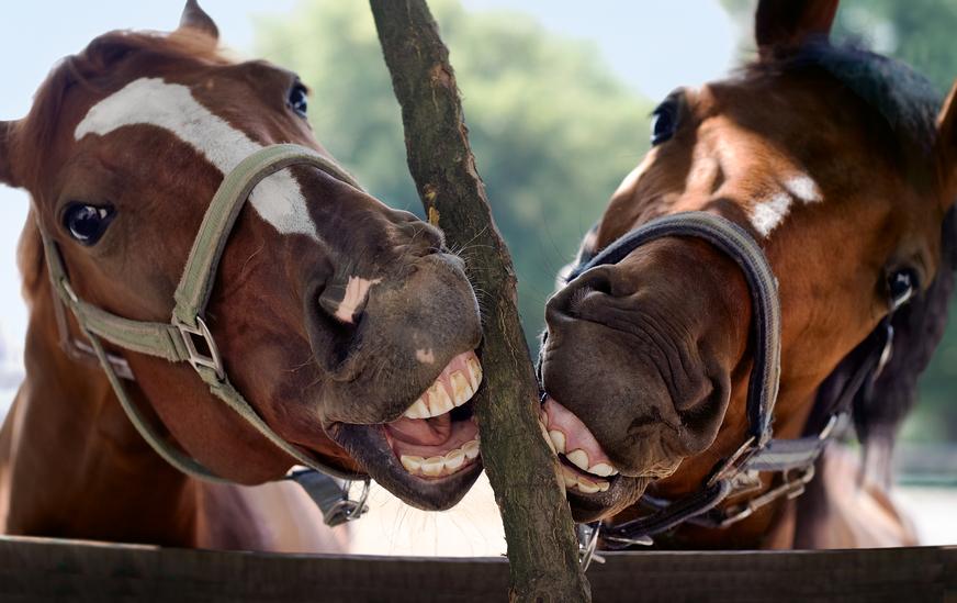 controle paardengebit