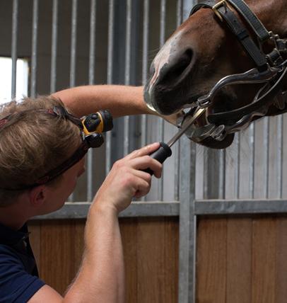 behandeling paardengebit